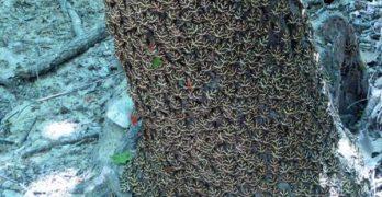 κοιλάδα πεταλούδων προστατευόμενες περιοχές